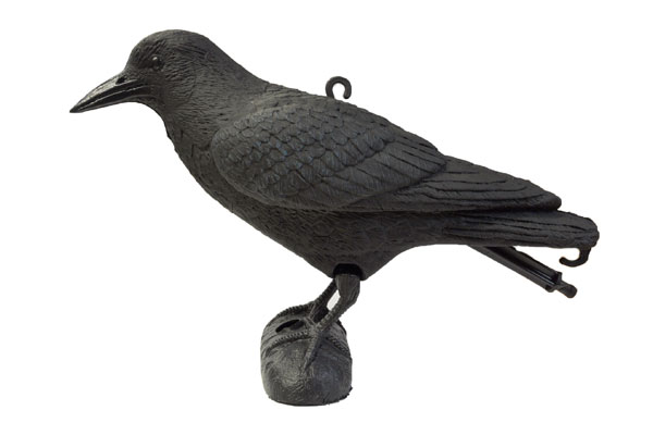 Decoy bird: Crow